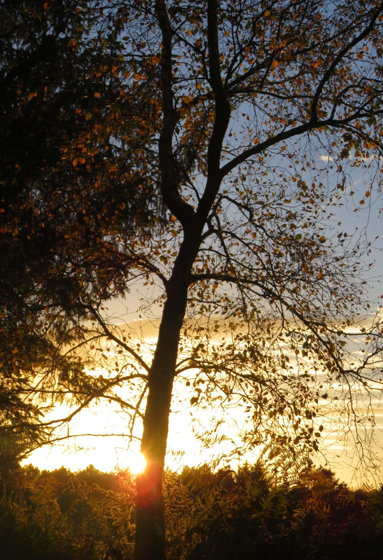 colloque nov 2016 et automne 053pm.jpg