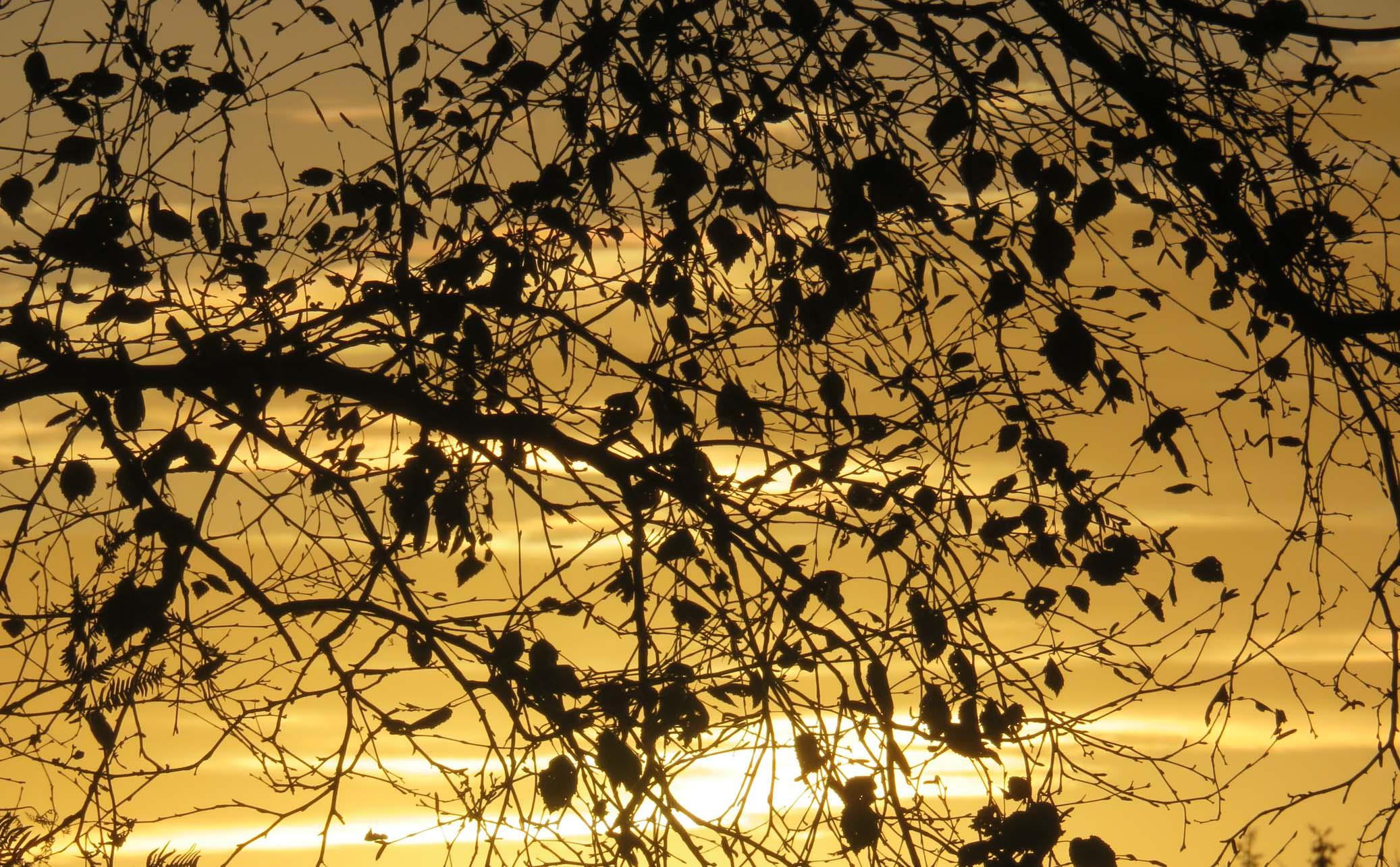 colloque nov 2016 et automne 059pm.jpg