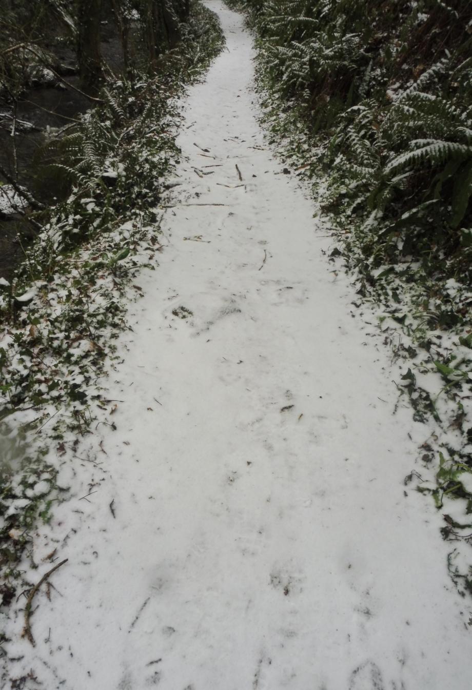 Gel et neige flora 01 03 2018 018pm.jpg