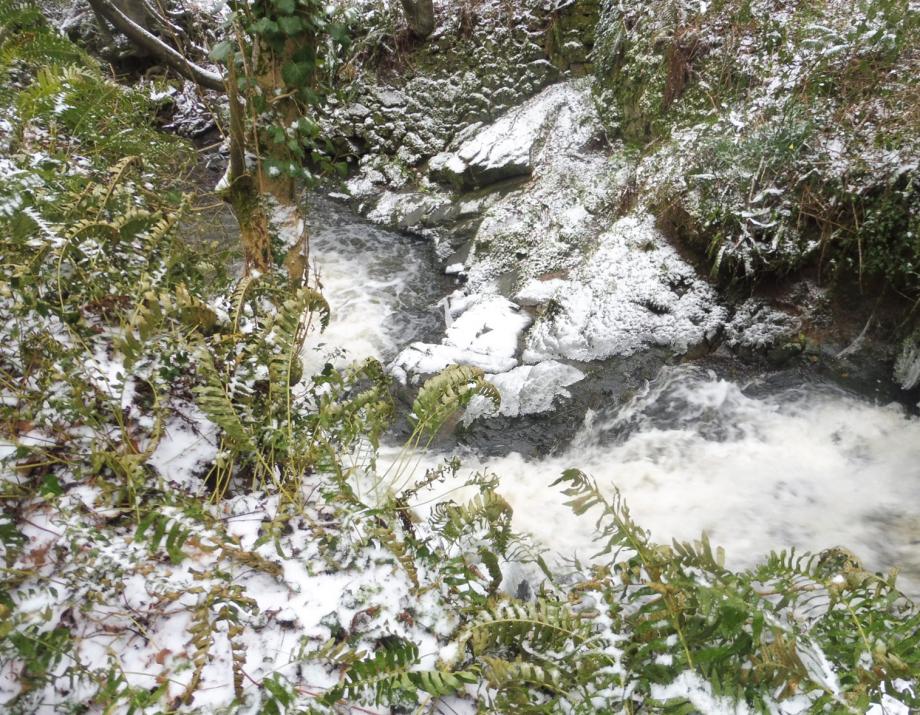 Gel et neige flora 01 03 2018 027pm.jpg
