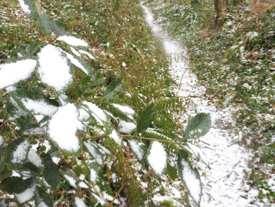 Gel et neige flora 01 03 2018 014pm.jpg