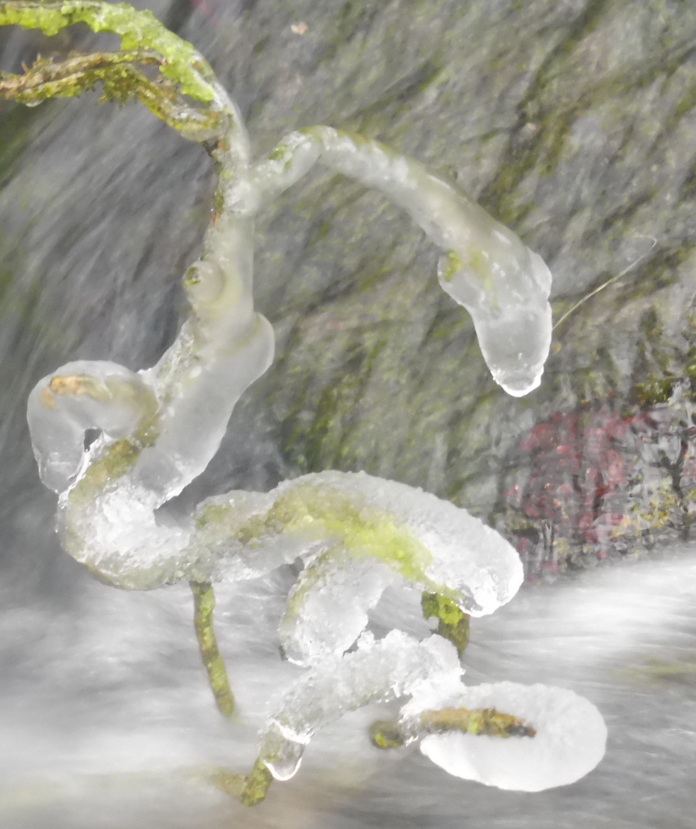 Gel et neige flora 01 03 2018 231pm.jpg
