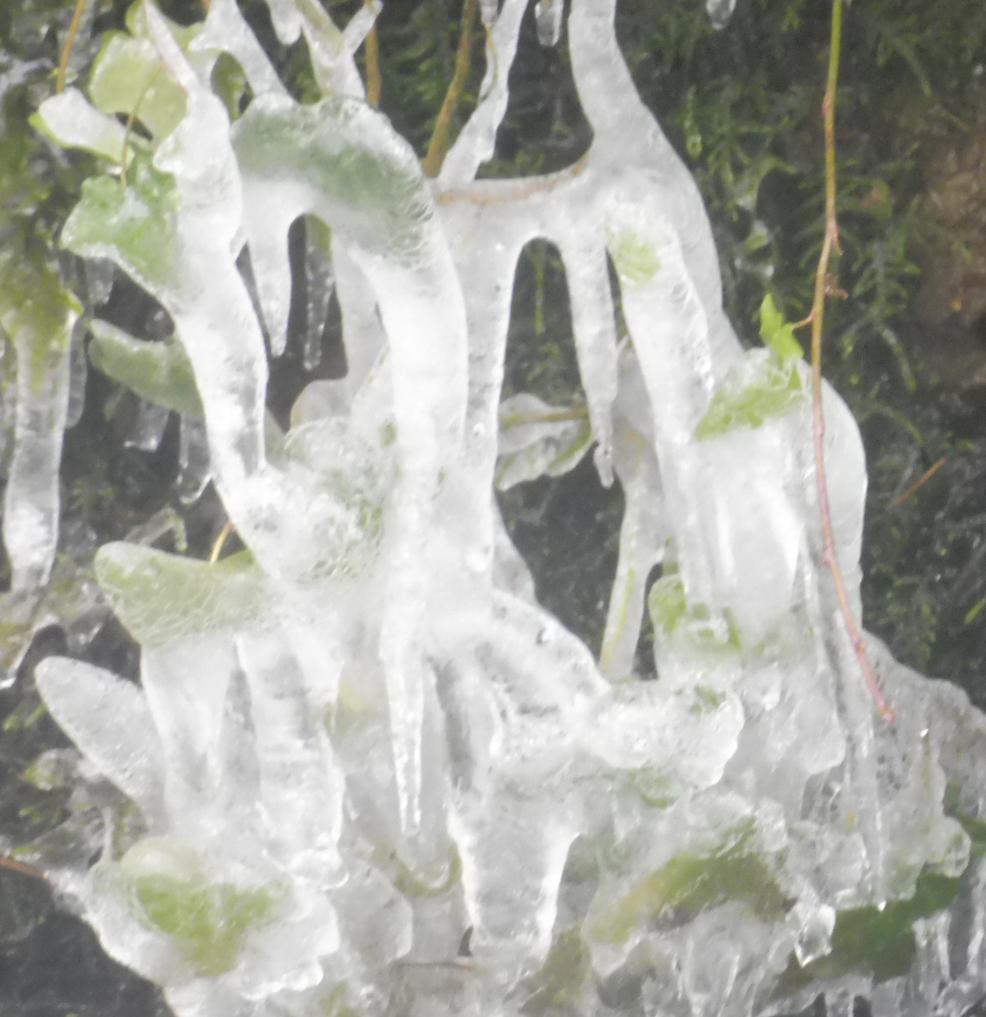 Gel et neige flora 01 03 2018 319pm.jpg