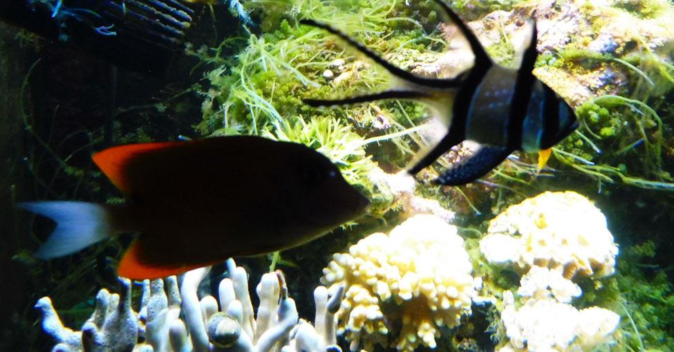 Divers NOV 2017 Colloque 028pm.jpg