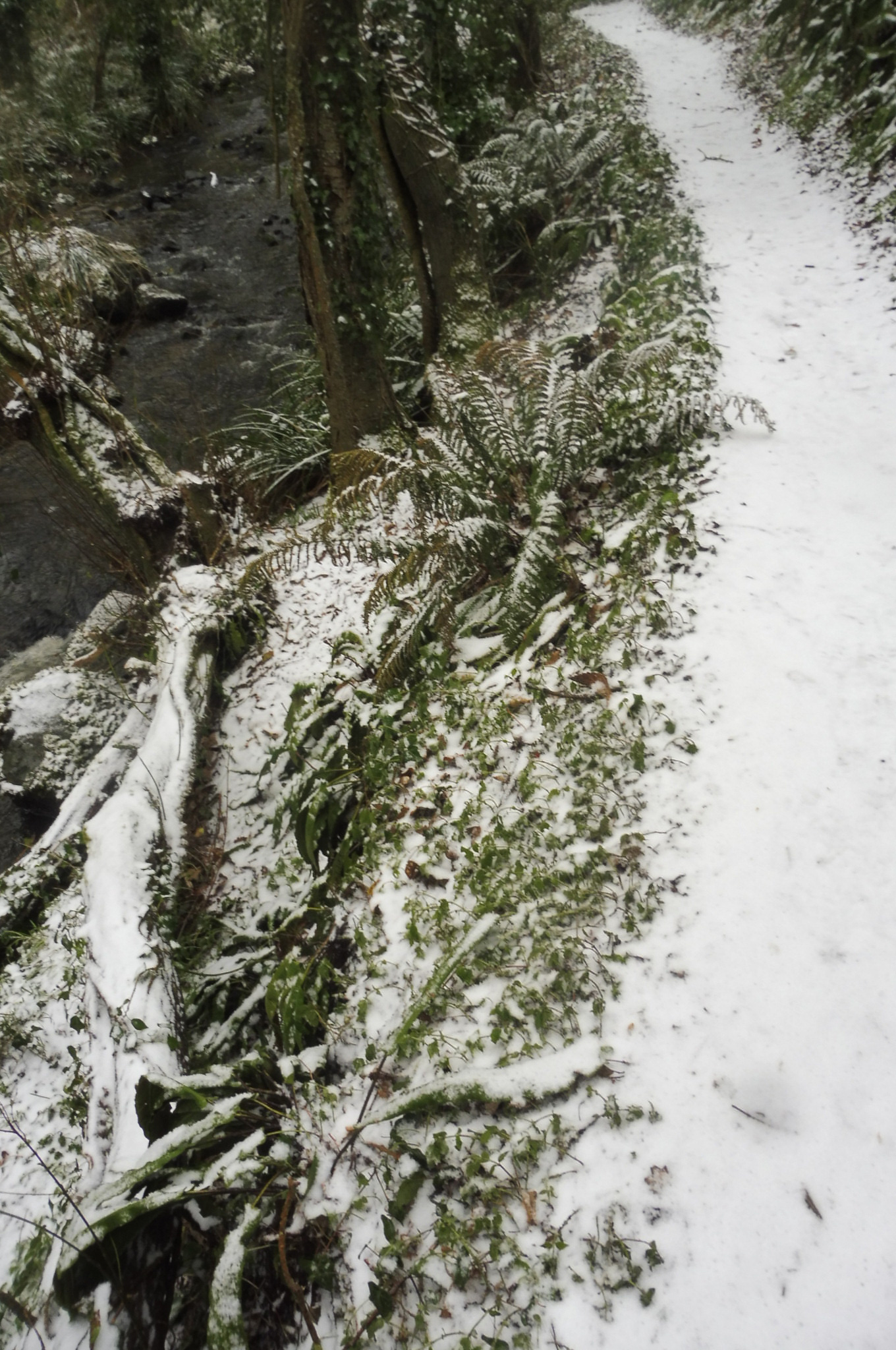 Gel et neige flora 01 03 2018 019pm.jpg
