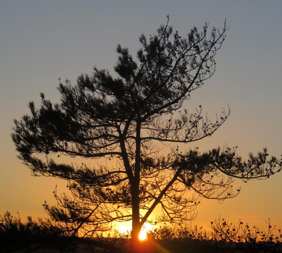 Baie de Morieux 16 08 2018 039pm.jpg
