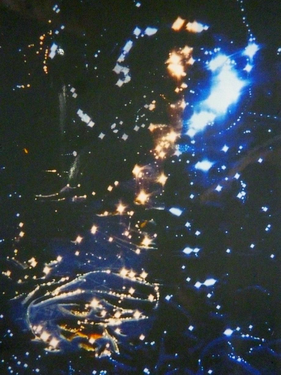 archives photosVerbatim bran du 7614pm.jpg