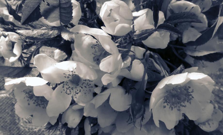 Bouquet pour les chers disparus juin 2019 004pm.jpg