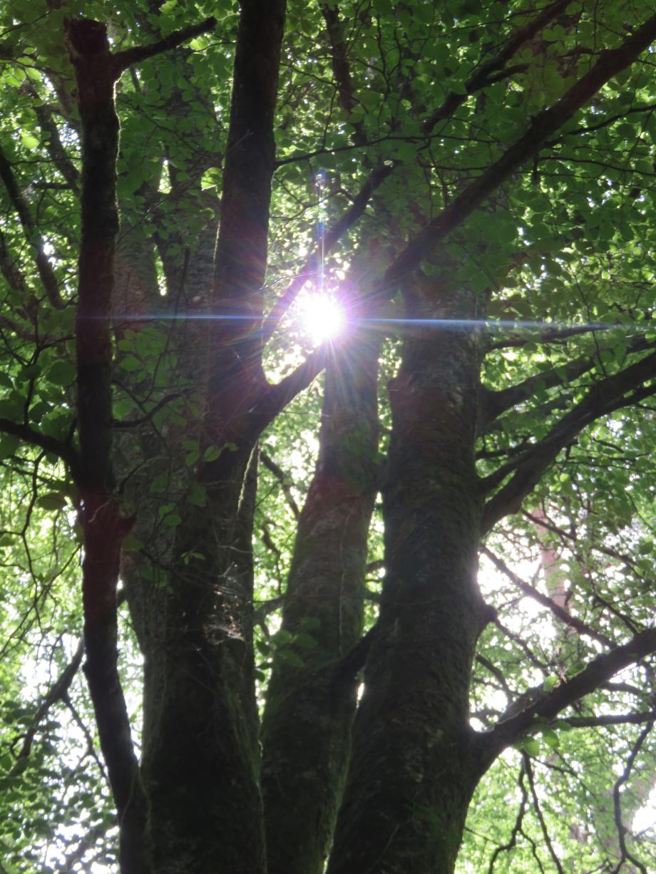 Forêt Juin 2019 002pm.jpg