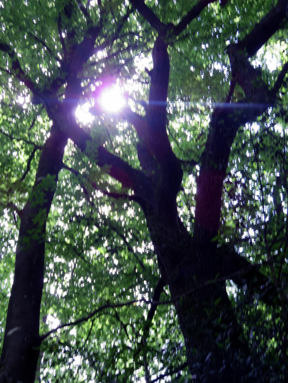 Forêt Juin 2019 012pm.jpg