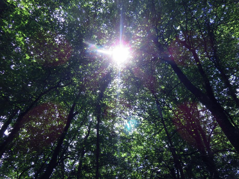 Forêt Juin 2019 020pm.jpg