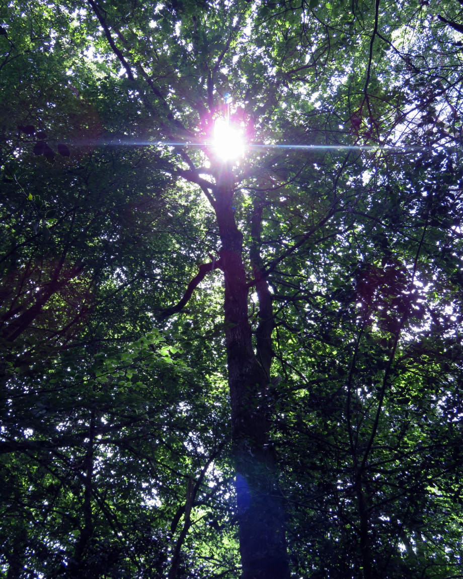 Forêt Juin 2019 026pm.jpg