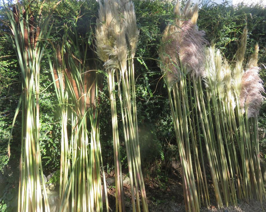 9 vague land art St Pabu 20190 EVE 001pm.jpg