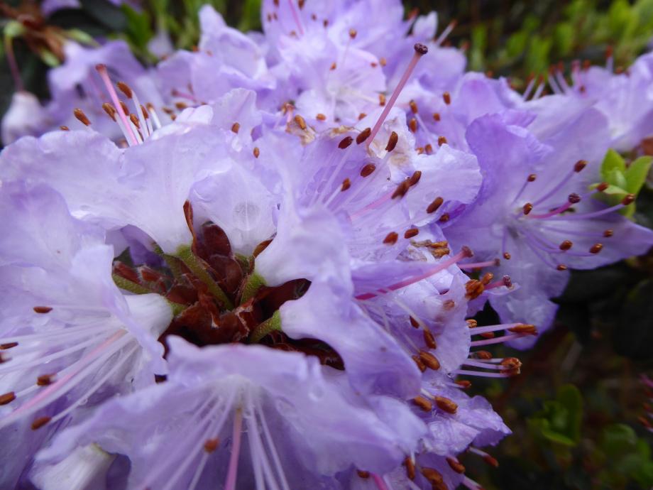 Estival art etre nature Avril 2015 029pm.jpg