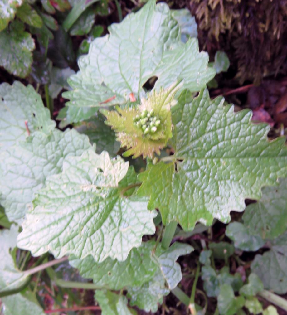 Flora I 312pm.jpg