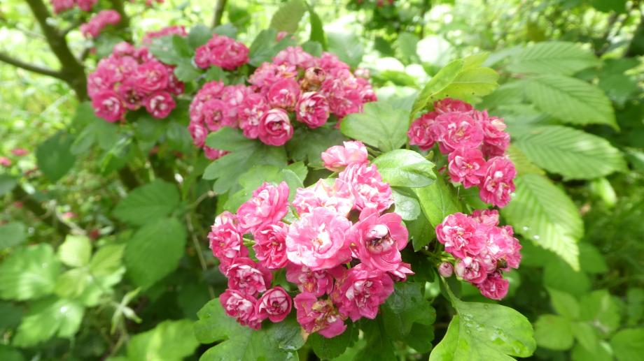 Flora 05 MAI 2020 NA 327.JPG
