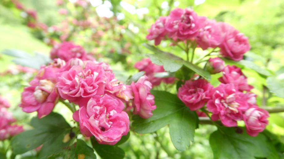 Flora 05 MAI 2020 NA 328.JPG