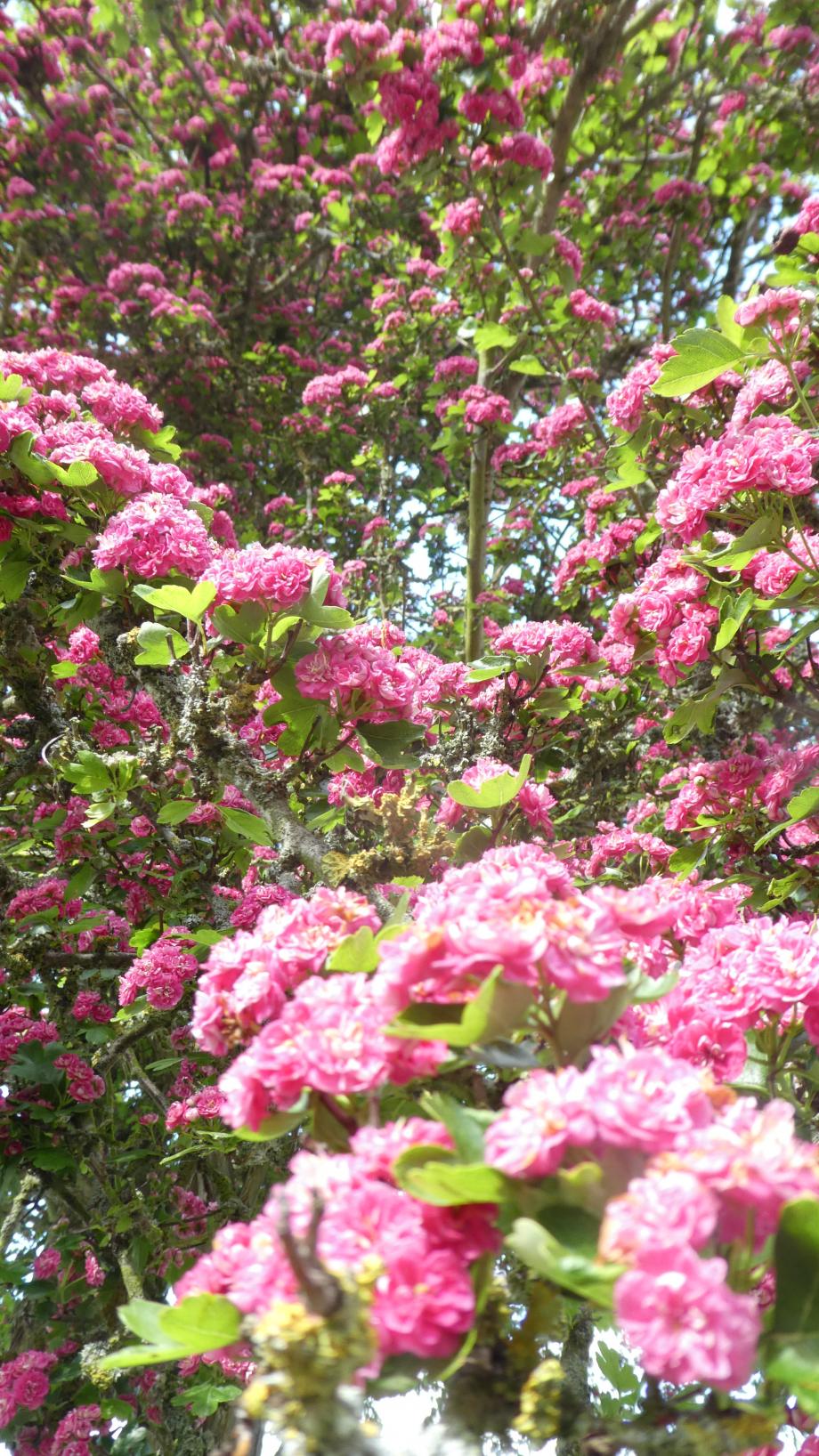 Flora 05 MAI 2020 NA 379.JPG