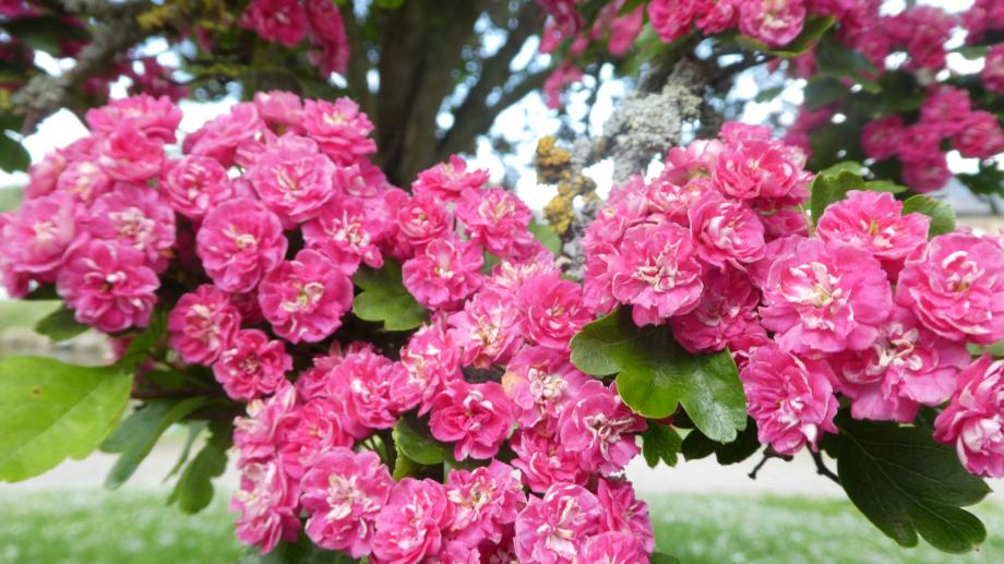 Flora 05 MAI 2020 NA 380.JPG