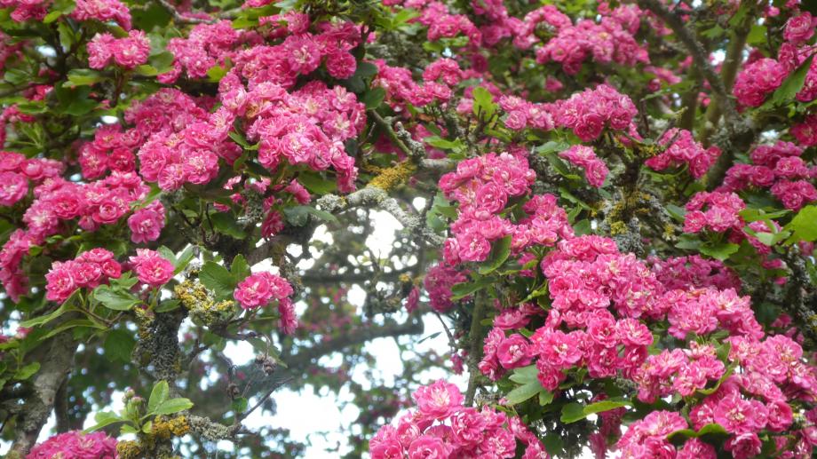 Flora 05 MAI 2020 NA 381.JPG