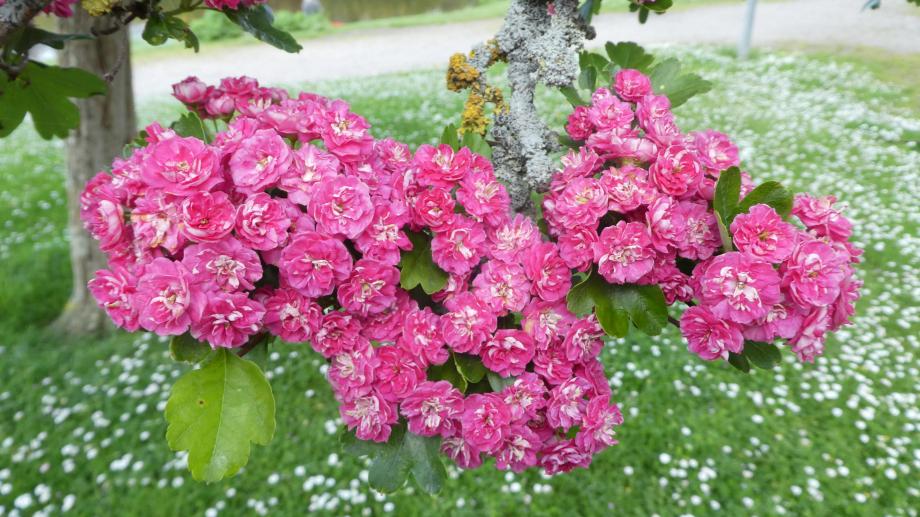 Flora 05 MAI 2020 NA 382.JPG