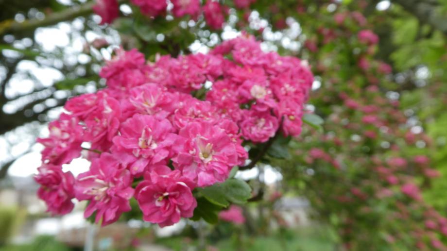 Flora AN Avril 29 202° 108.JPG
