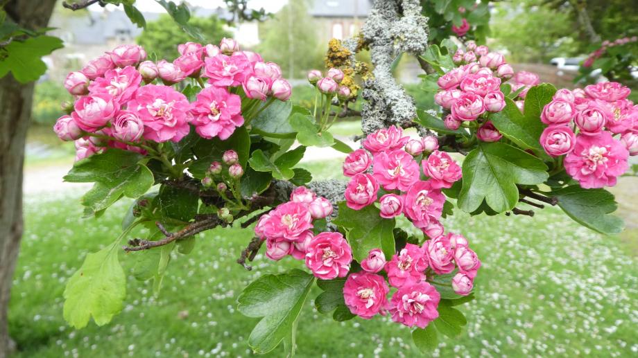 Flora AN Avril 29 202° 105.JPG