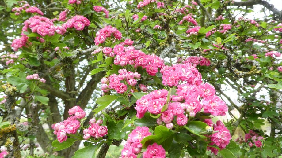 Flora AN Avril 29 202° 104.JPG