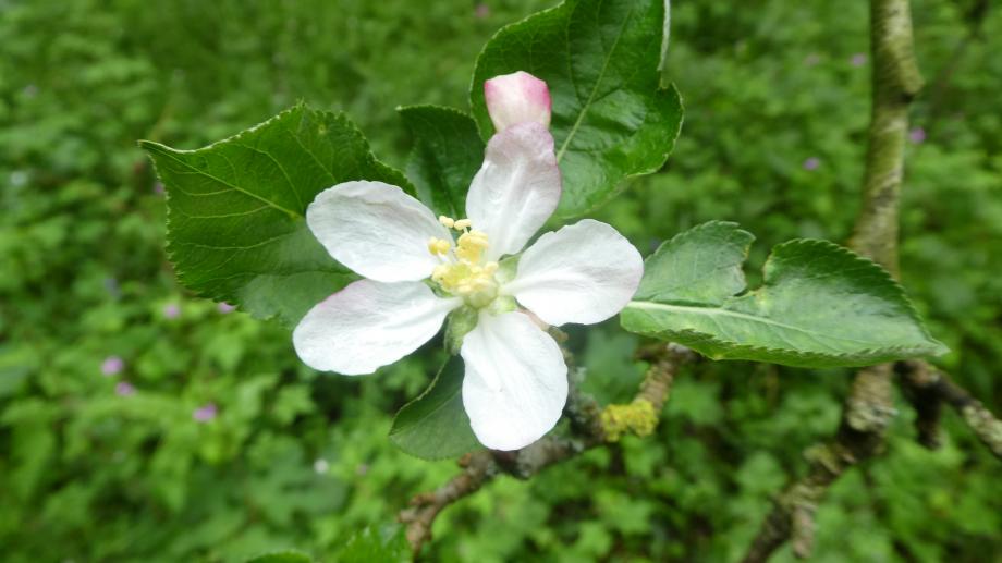 Flora 05 MAI 2020 NA 276.JPG