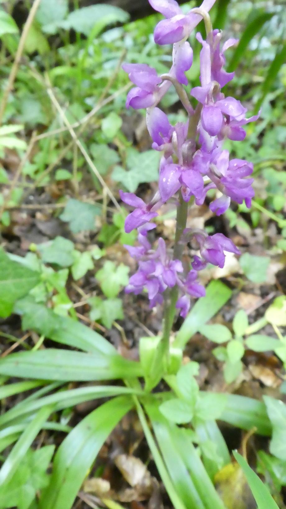 Flora 05 MAI 2020 NA 307.JPG