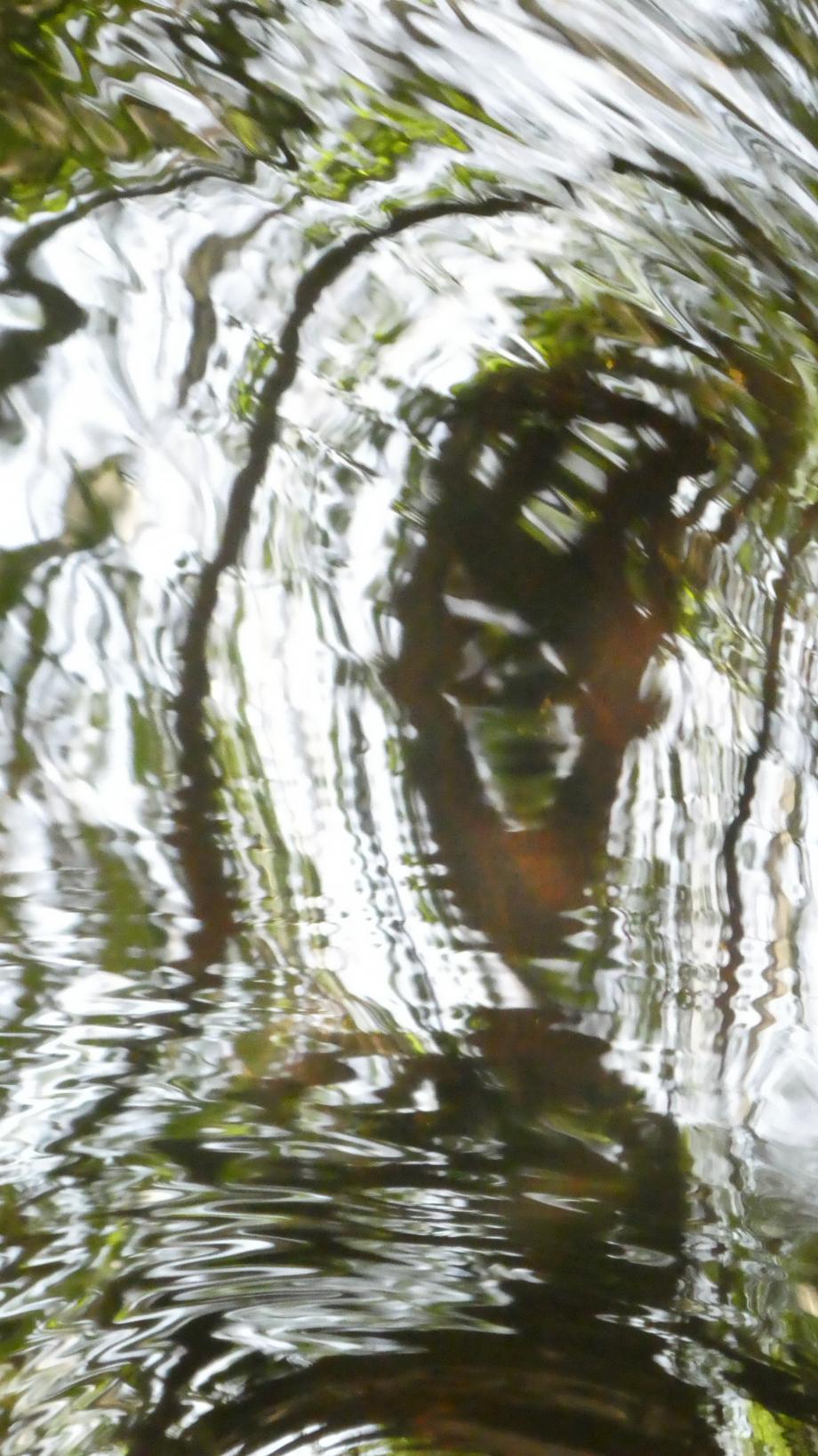 Flora Mai 2020 07 AN 145.JPG
