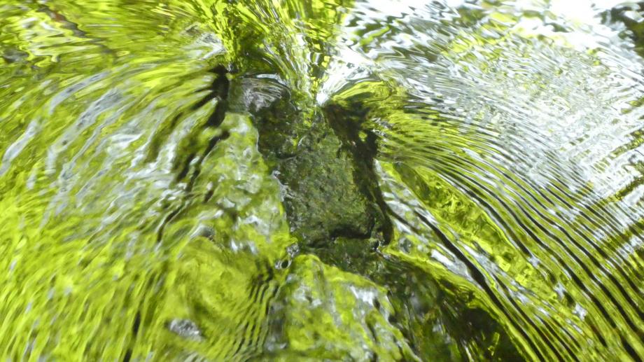 Flora Mai 2020 07 AN 167.JPG