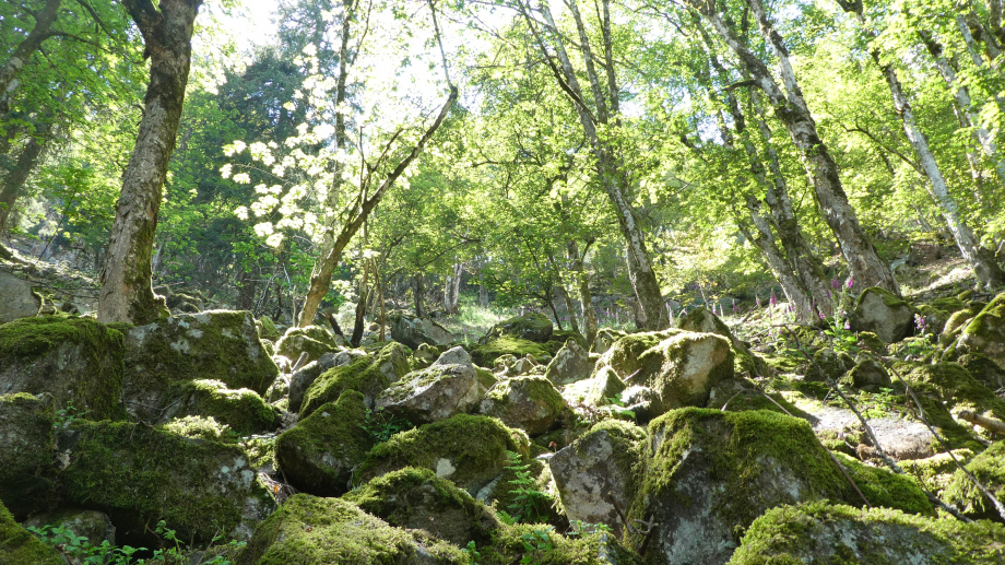 Vosges partie 3 07 2020 099.JPG