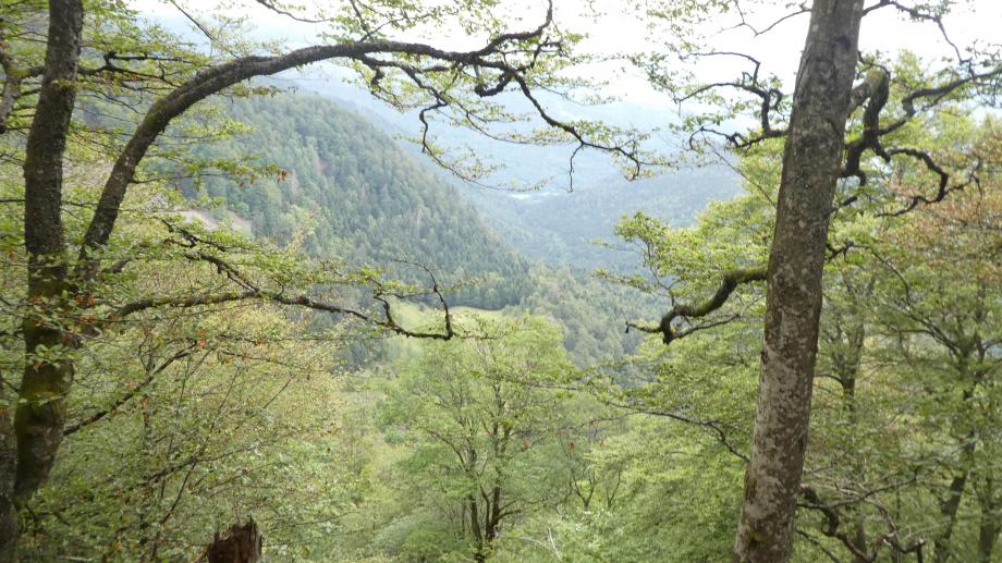 Vosges partie 3 07 2020 897.JPG