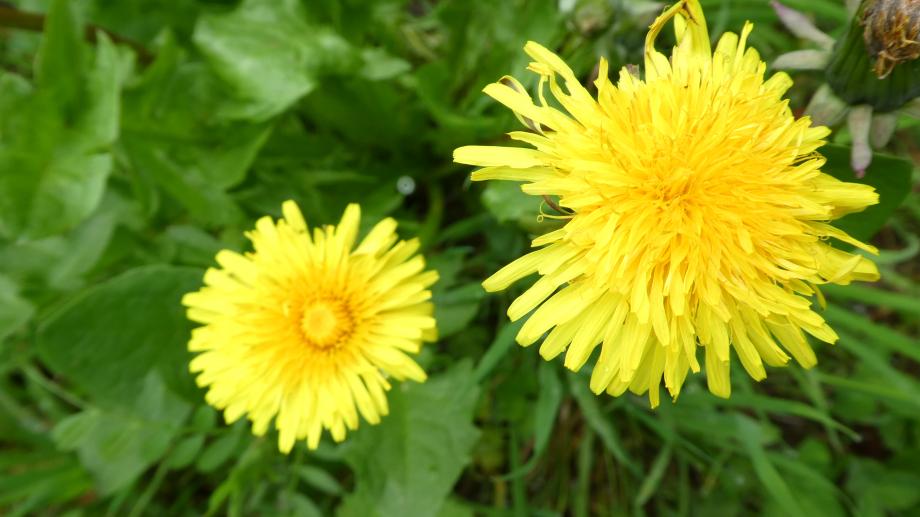 Flora 05 MAI 2020 NA 034.JPG