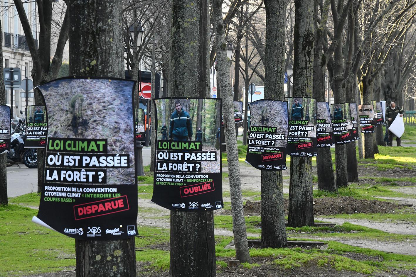 Climat et forêt BBF8297.jpg
