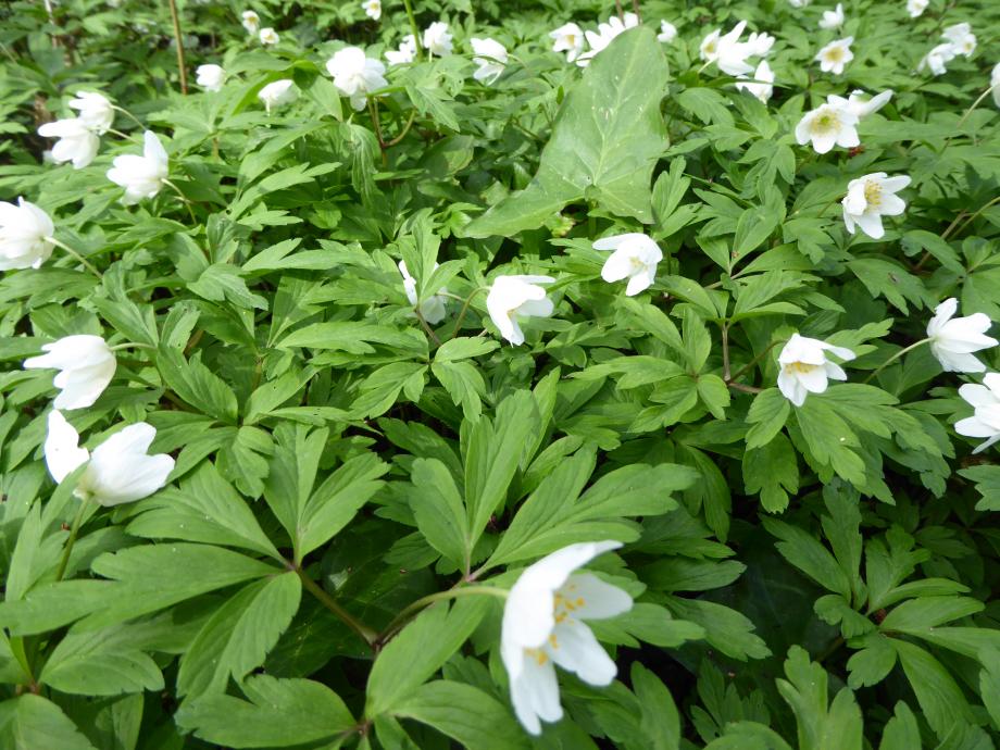 Flora 01 04 2015 11 311.JPG