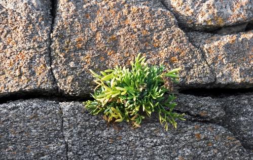 pointe du but rocher plante_modifié-1.jpg