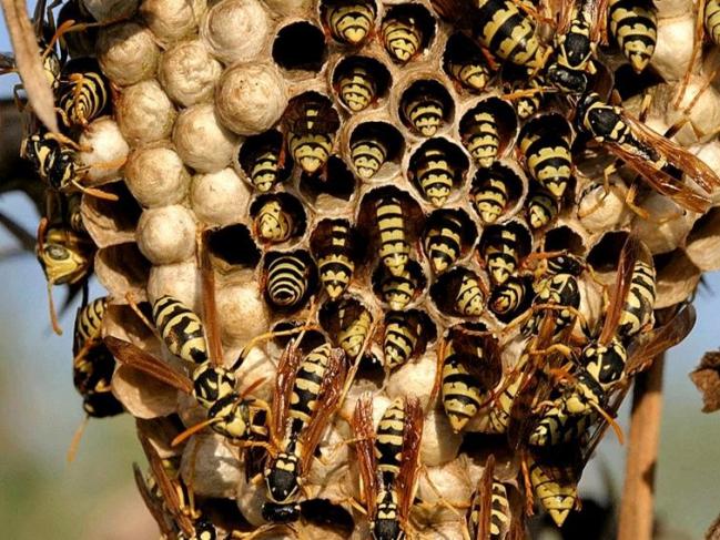 2 abeille_31.jpg