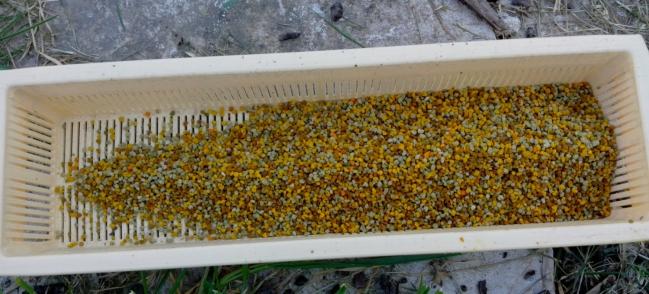 22 - 3 Tiroir à pollen.jpg