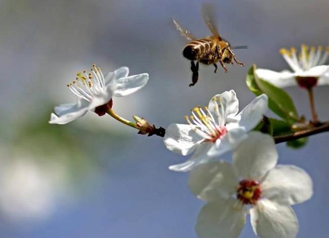 38 - abeille_32.jpg