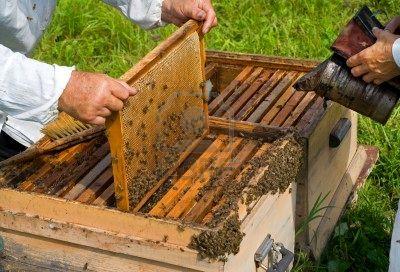 47 un-gros-plan-de-la-ruche.jpg