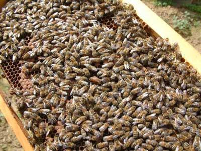 48 abeille_6.jpg