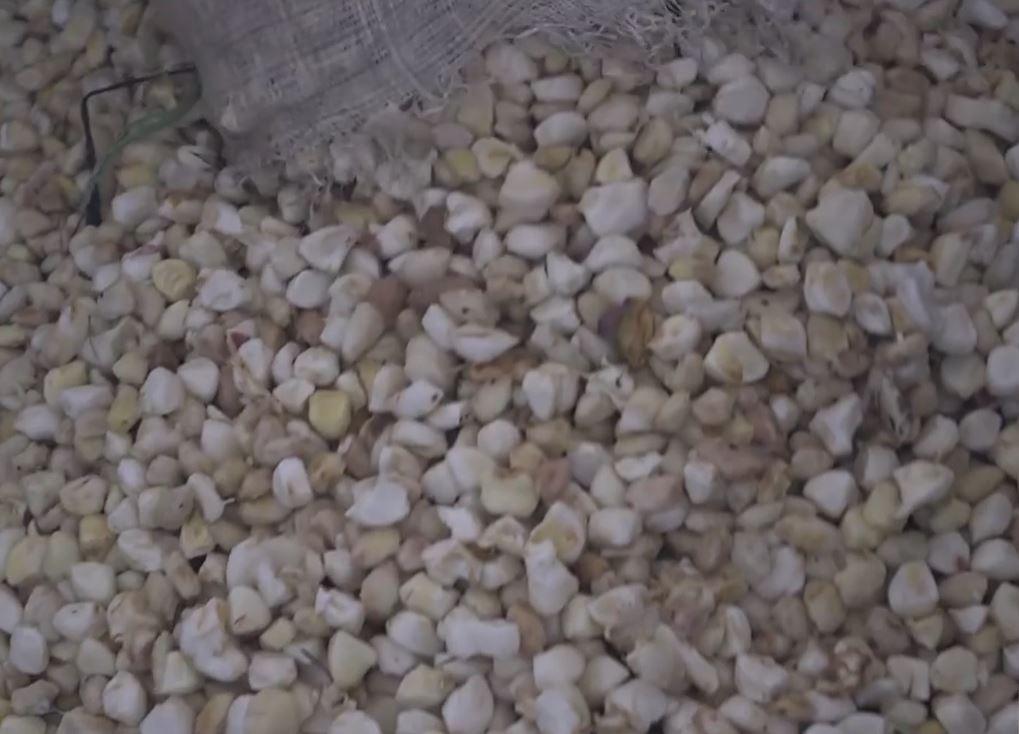 19_fermentation des fèves.JPG
