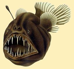 28_Humpback_anglerfish.png