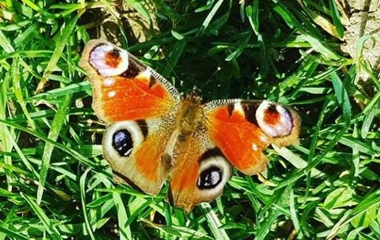 Papillon de Provence.jpg