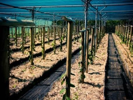 9 - 6 - 1 - plantation.jpg