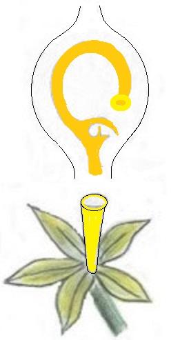 11 - Fleur de Vanille.jpg