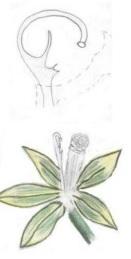 15 - Fleur de Vanille.jpg