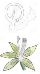17 - 1 - Fleur de Vanille.jpg